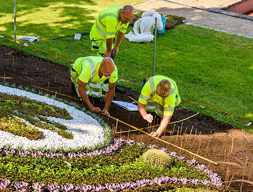 Image: North Georgia Landscape Management staff work on residential landscaping project. Duluth, GA landscaping company.